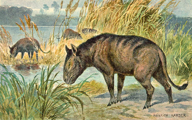Merycoidodon (Heinrich Harder)