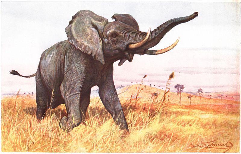 Afrikanischer Elefant (Friedrich Wilhelm Kuhnert)