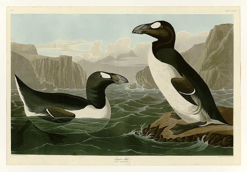 Riesenalk (John James Audubon)