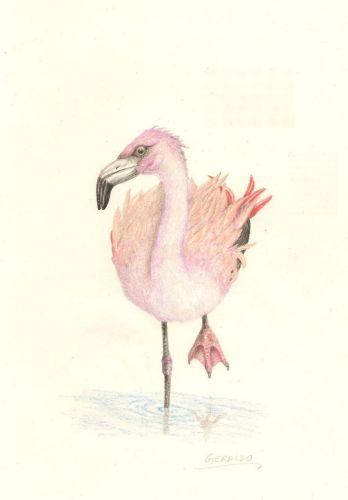 Agnopterus sicki (Geraldo de França Jr)