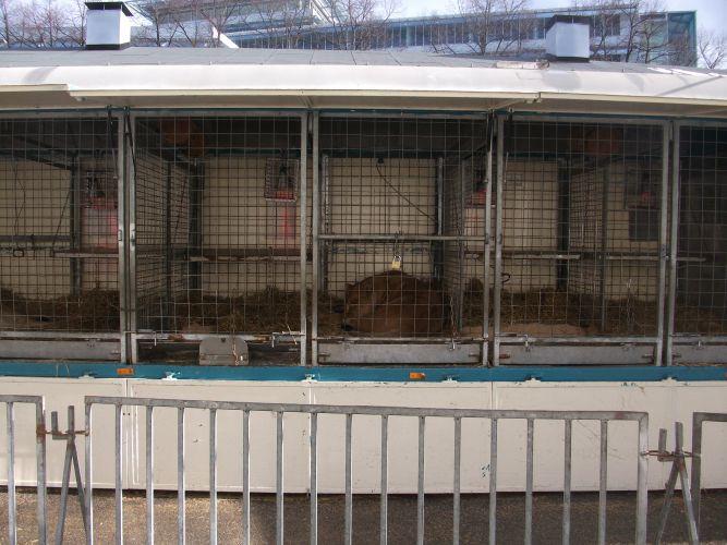 Löwengehege (Zirkus Krone Zoo)