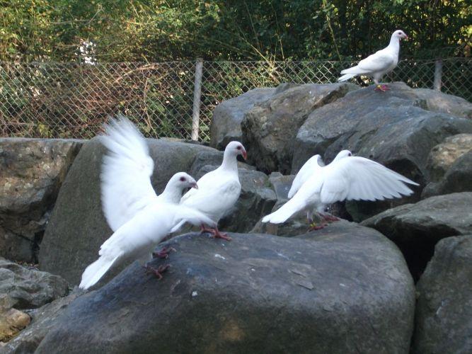 Fränkische Bagdette (Zoologischer Garten Hof)