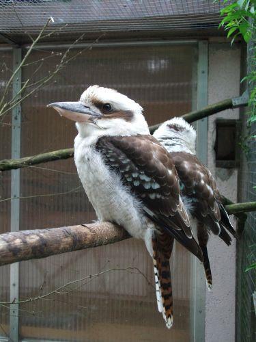Jägerliest (Vogelpark Abensberg)