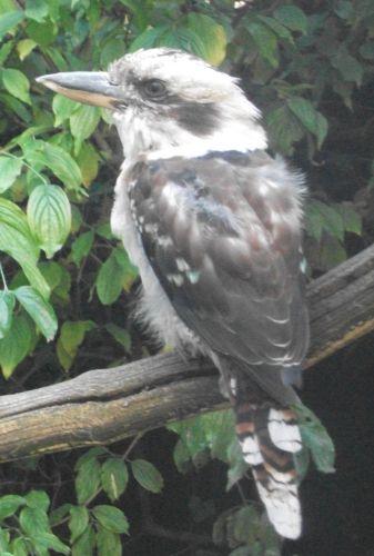 Jägerliest (Vogelpark Olching)