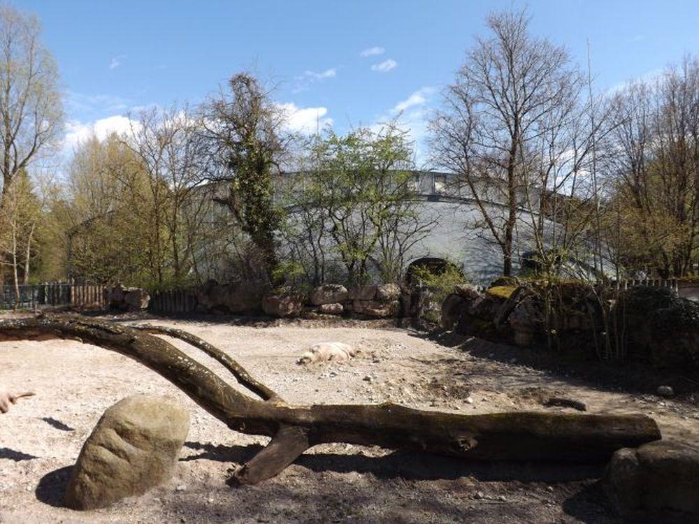 Nashornhaus von der Bartschweinanlage aus gesehen