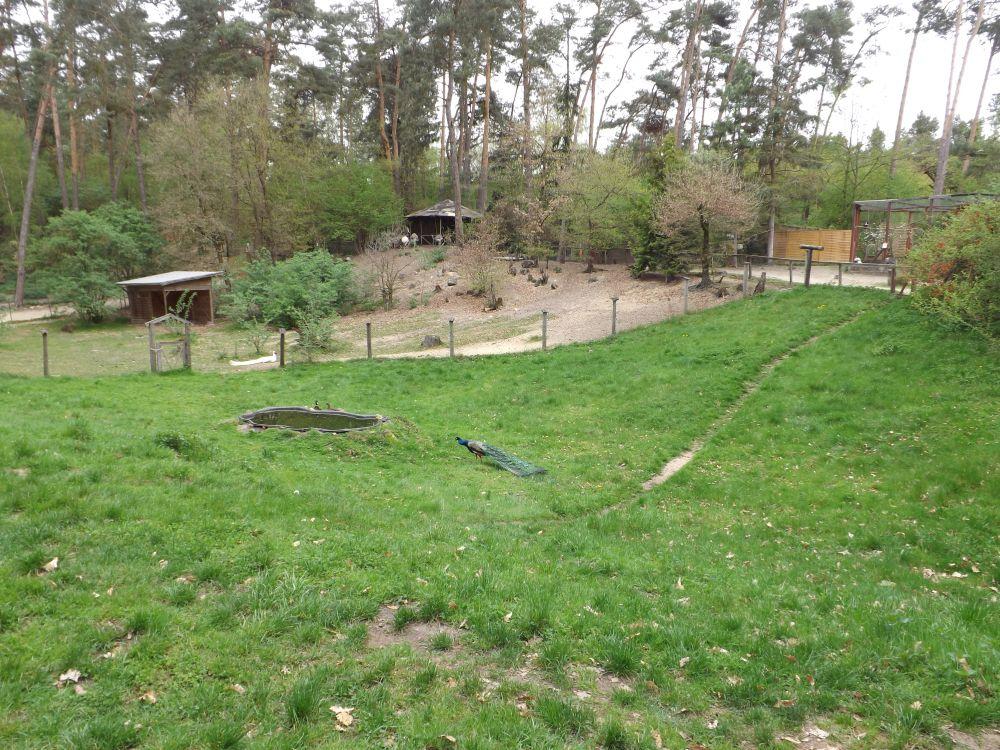 Blick auf das Areal der Greifvogelschau, im Hintergrund das Nandugehege