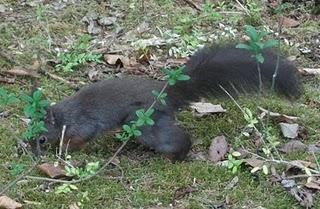 Eichhörnchen (Tiergarten Nürnberg)