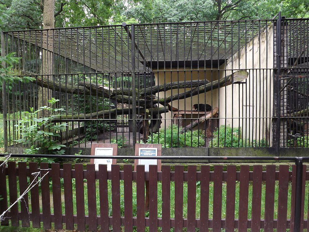 Malaienbärengehege (Zoo Hodonin)