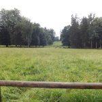 Damhirschanlage (Wildpark Schloss Tambach)