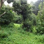 Greifvogelanlage (Zoo Schmiding)