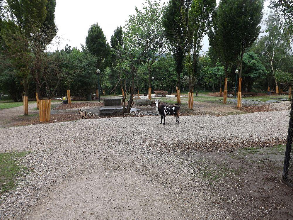 Streichelzoo (Zoo Schmiding)