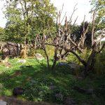 Bärenanlage (Zoo Duisburg)