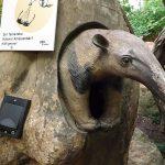 Tropenhalle-Brillentrockner (Zoo Krefeld)