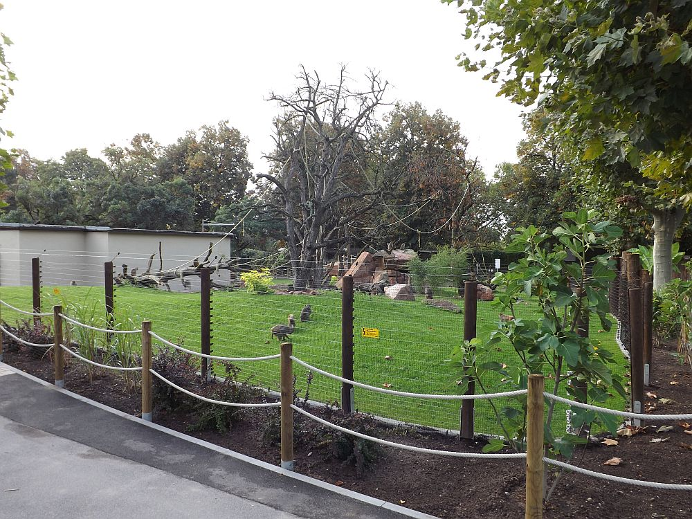 Rhesusaffenanlage (Zoo Heidelberg)