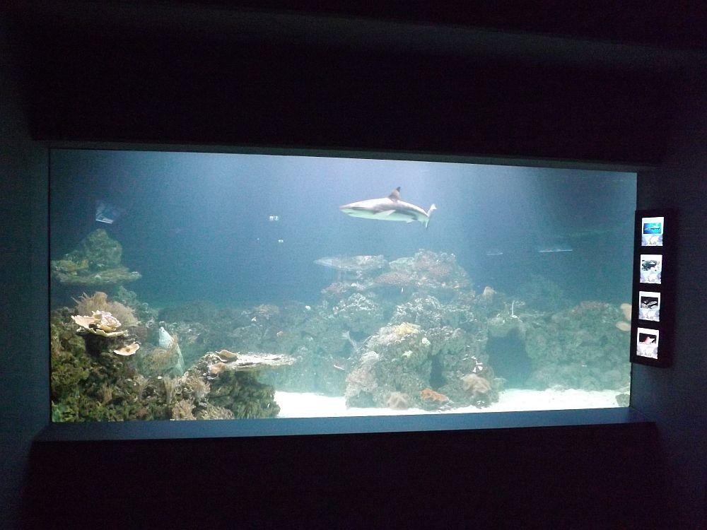 Teilansicht des neuen Haibeckens (Tierpark Hellabrunn)