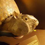 Glyptodon (Museum Mensch und Natur)