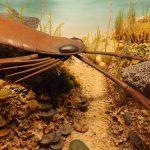 Diorama, Vor 420 Millionen Jahren, Seeskorpion (Museum Mensch und Natur)