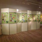 Systematik im Tierreich (Museum Mensch und Natur)