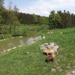 Braunbärenanlage (Wildpark Poing)
