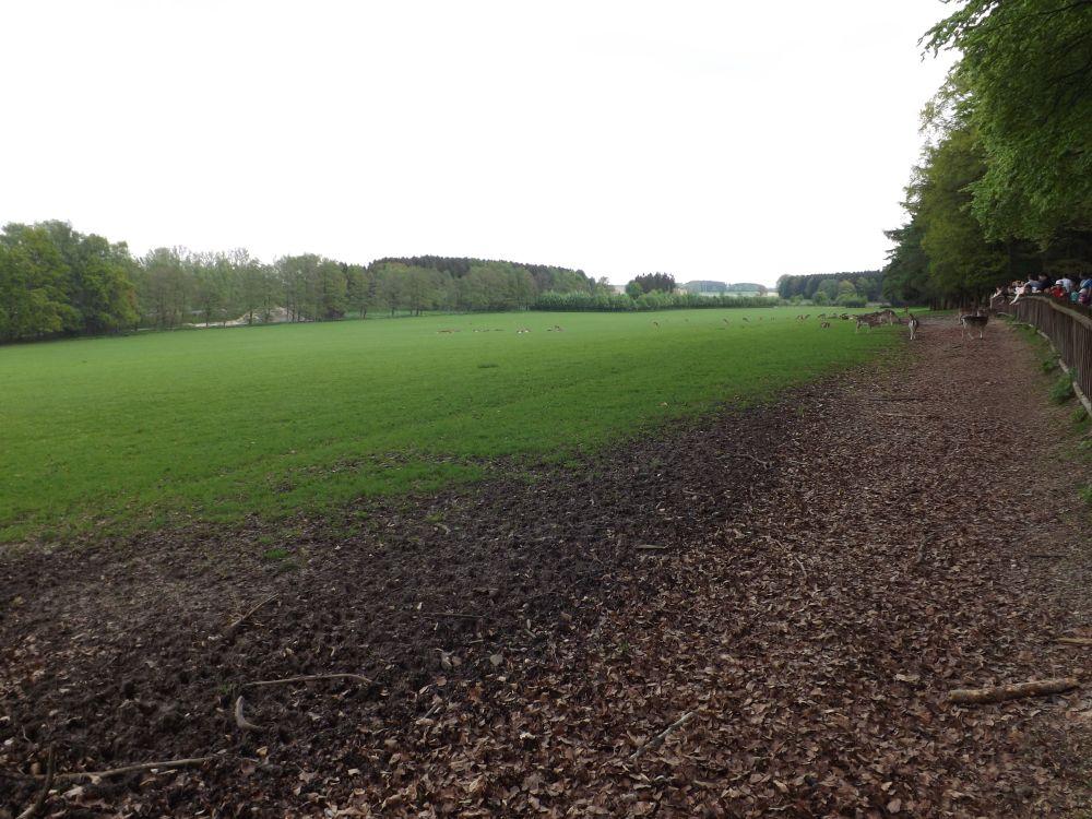Damhirschgehege (Wildpark Poing)