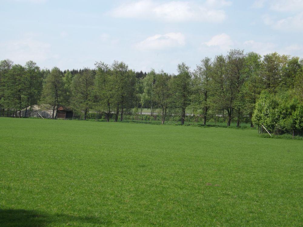 Damhirschgehege mit Elchgehege im Hintergrund (Wildpark Poing)