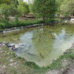 Fischteich (Wildpark Poing)
