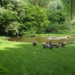 Vogelwiese (Wildpark Poing)