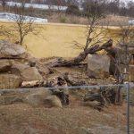 Außenanlage der Klippschliefer (Thüringer Zoopark)