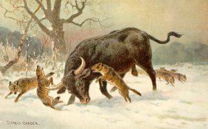 Wölfe jagen Auerochsen (Heinrich Harder)