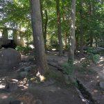 Anlage für Syrische Braunbären und Rotfuchse (Zoo Stralsund)