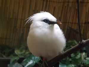 Balistar (Zoo Hodonin)
