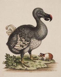 Dodo und Meerschweinchen (George Edwards)