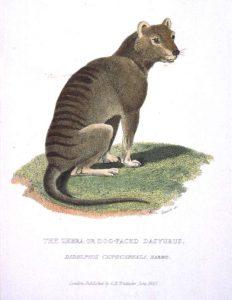 Beutelwolf (James Basire, Georges Cuvier)