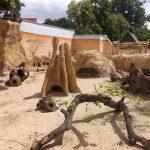 Erdmännchenanlage (Zoo Hoyerswerda)
