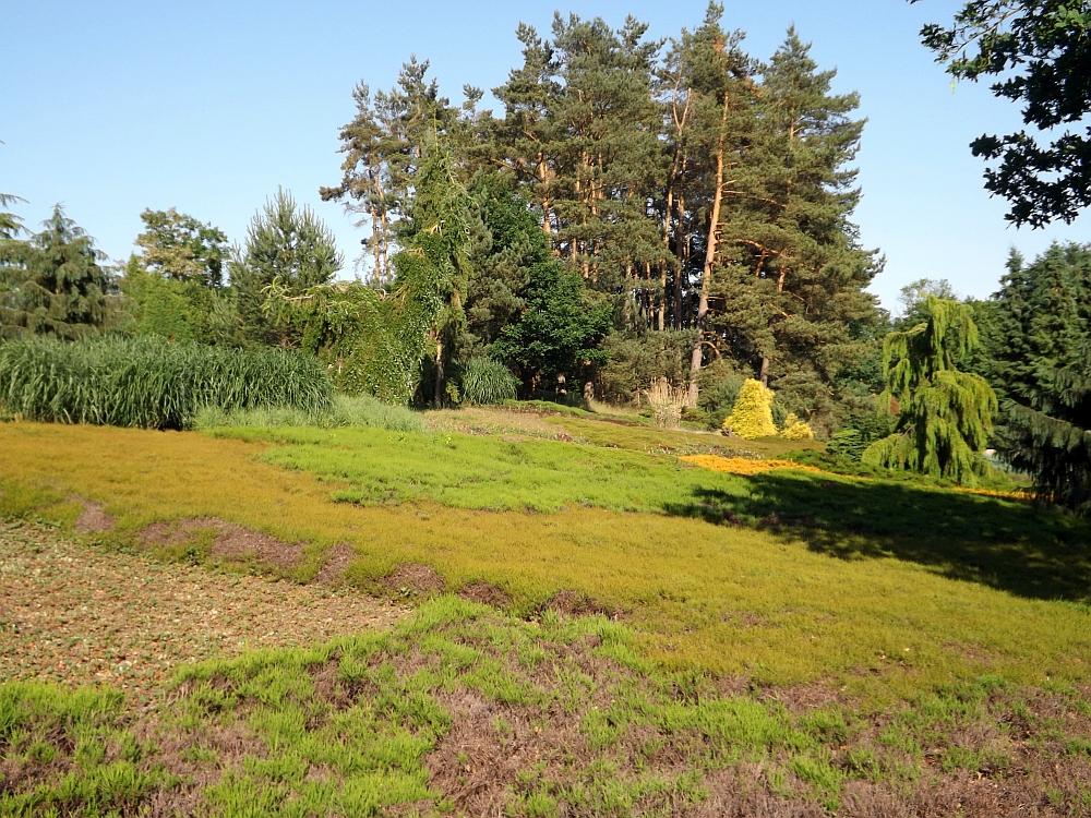 Heidelandschaft (Vogelpark Marlow)