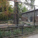 Löwenanlage, noch mit Löwen (Zoo Hoyerswerda)