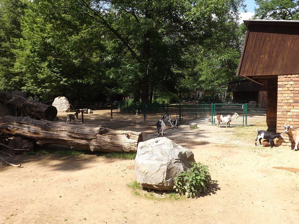 Streichelzoo (Tierpark Cottbus)