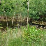 Sumpfschildkrötenanlage (Tiergarten Eisenberg)