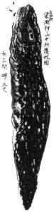 Darstellung des Tsuchinoko von Kuroda Suizan (um 1859)
