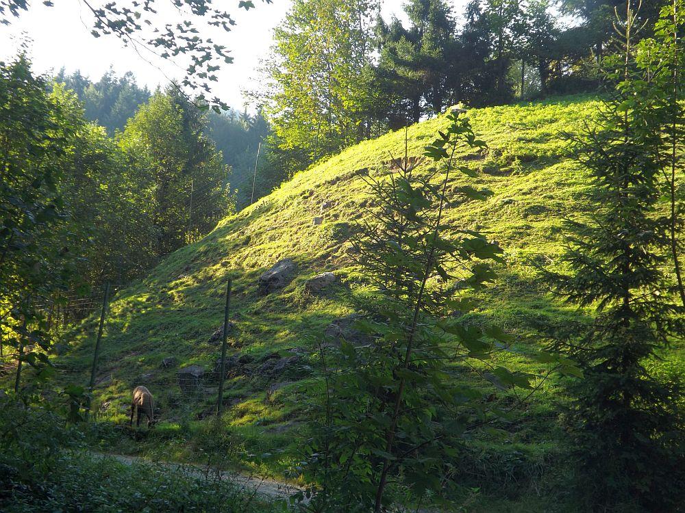 Gemsenanlage (Wildpark Wildbichl)