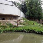 Gorillabai (Zoo Schmiding)