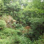 Luchsanlage (Tierfreigelände I des Nationalparks Bayerischer Wald)