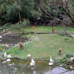 Vogelwiese (Zoo Salzburg)