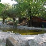 Weißstorchanlage (Zoo Linz)