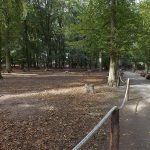 Freigehege der Damhirsche (Tierpark Essehof)