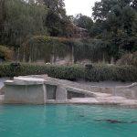 Seelöwen und Eisbären (Zoo Wuppertal)