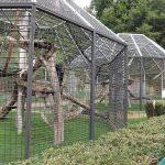 Außenanlage für Schimpansen (Zoo Saarbrücken)