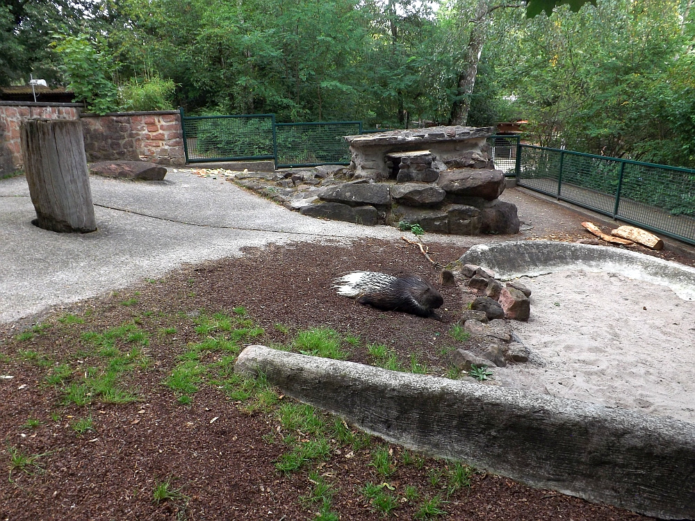Stachelschweinanlage (Zoo Kaiserslautern)