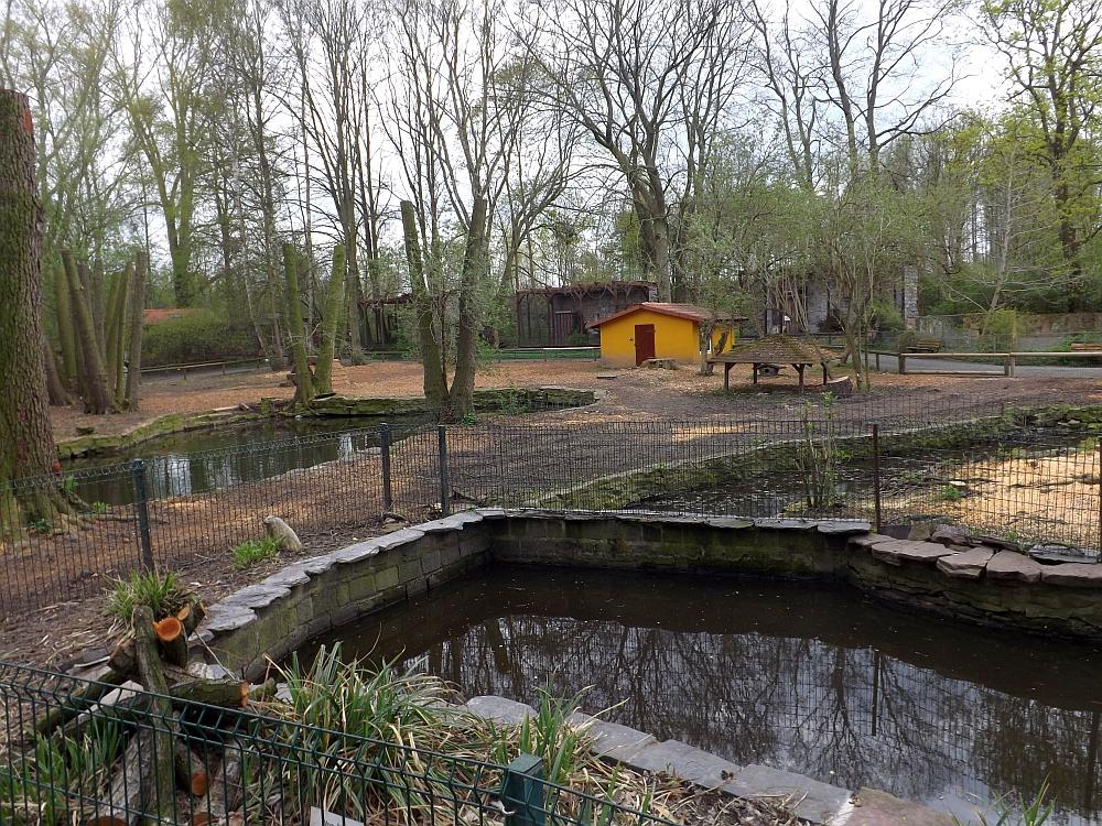 Biberanlage mit Storchenwiese im Hintergrund (Tierpark Gotha)