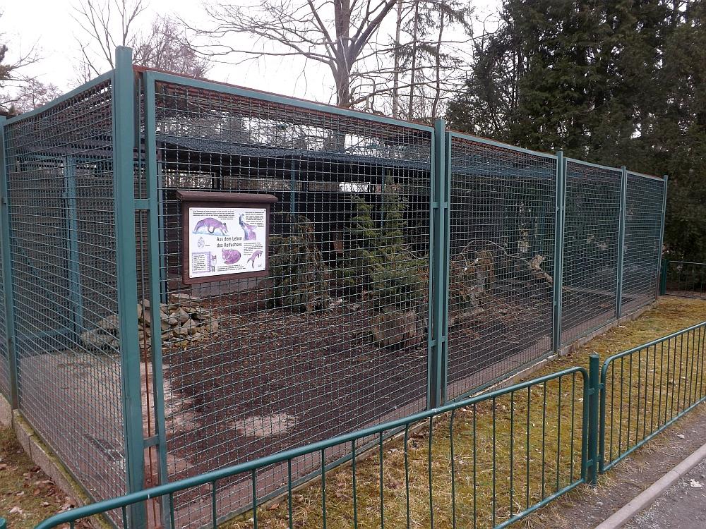 Anlage für Rotfüchse (Tiergarten Freiberg)